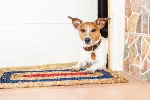 dog door orange county ca