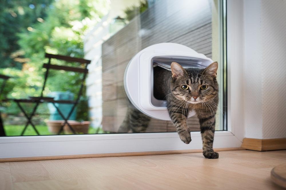 Cat entering through pet door